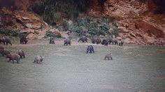 Esta foto fue tomada en el parque natural de Cabárceno. Con ella podemos ver la importancia de preservar y ver diferentes tipos de animales, viviendo en cierta libertad. Además de la importancia de que los niños visiten este tipo de lugares y aprendan cosas de los animales y de su entorno.
