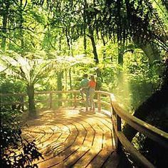 The Great Otway National Park is inspiring with its amazing rainforests, cliffs, four wheel drive tracks and the Otway Tree Top Walk. Places To Travel, Places To See, Travel Around The World, Around The Worlds, Apollo Bay, Park Homes, Tree Tops, I Want To Travel, Victoria Australia