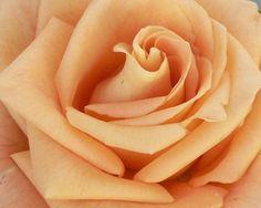 orange swirl by dmguthery