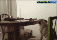 Crazy-Dog-Without-His-Owner.gif (350×250)