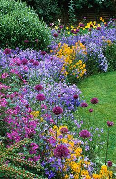 Allium hollandicum 'Purple Sensation' with Campanula patula and Erysimum…