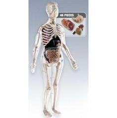 Visible Female Anatomy Kit