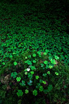 Feeling lucky? by jasontheaker, via Flickr