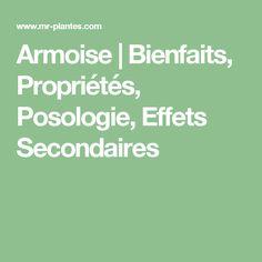 Armoise   Bienfaits, Propriétés, Posologie, Effets Secondaires