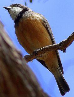 IMGP4970 Australia, River, Explore, Animals, Image, Animales, Animaux, Animal, Animais