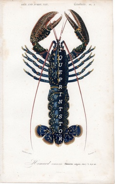 ***beautiful lobster****