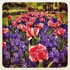Beautiful Place  #tulipfieldsexperience #holland #earlybirdlove #igersholland #ebstyles_gf #dutch #jj_forum #flower #keukenhof - @alanisko- #webstagram