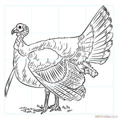 Cute Baby Turkey Coloring Pages. Turkey is one type of large bird that is usually used as a dish on celebrations of holidays in several countries. Every Thanksgiving and Christmas in . Horse Drawings, Pencil Art Drawings, Bird Drawings, Realistic Drawings, Easy Drawings, Turkey Coloring Pages, Animal Coloring Pages, Drawing Tutorials For Kids, Drawing For Kids