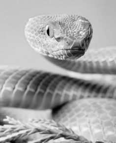 ✯ Snake :: Unknown Photograph ✯