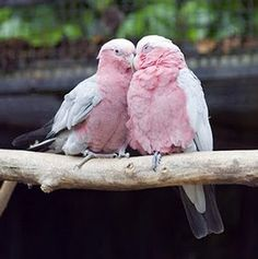 They're birds, and they're pink.