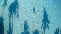 15Espectaculares fotos avista depájaro. Tahití, Polinesia