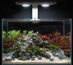 Aquascape Aquatic Plant Tank Lighting