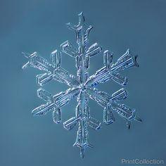 Stellar Dendrite Snowflake 001.2.16.2014