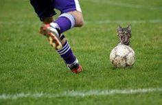 Resultado de imagen para fotos de futbol