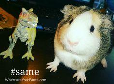 Guinea Pigs. #same #trex