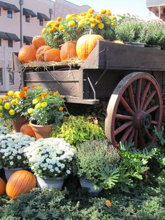 Fall mums....everything is beautiful in the old farm wagon....