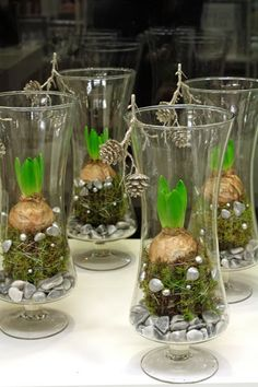 holmsundblüten … Weiße Hyazinthen im Glas mit Moos, Perlnadeln und Deko # Holmsundblüten The post Holmsundblüten … White hyacinths in the glass with moss, pearl needles and decoration appeared first on Leanna Toothaker. Christmas Flower Arrangements, Christmas Flowers, Floral Arrangements, Christmas Diy, Christmas Decorations, Indoor Flowers, Bulb Flowers, Deco Floral, Arte Floral
