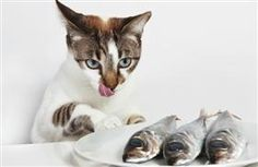 Protein in Pet Food: How Important is It?