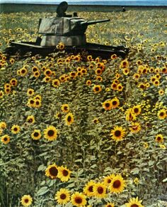 Soviet T-26 Tank abandoned during the retreat of Soviet troops on the western outskirts of Stalingrad in 1942.