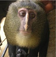 A New Kind of Monkey, With Colors That Set It Apart - NYTimes.com
