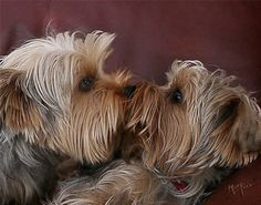 :-) yorkie kisses!