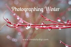 Photographing Winter: tips and tricks for getting great photos that capture Winter.