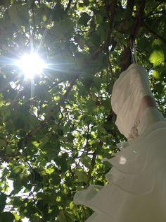 Trouwjurk in boom hangen voor mooie foto's