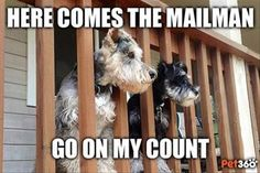 Dump A Day Attack Of The Funny Animals - 33 Pics