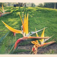 #blooming in #marinadelrey #california