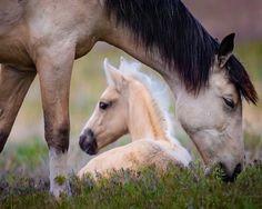Onaqui Wild Horses, Utah.