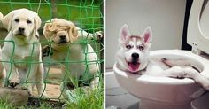 Tell us which of these dog fails would be your dog! #doglover #dogfun https://9gag.com/gag/azrvWLx?ref=pn