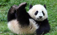 太くても柔らかいですよ。パンダの着ぐるみはhttp://www.mascotshows.jp/category/panda.html