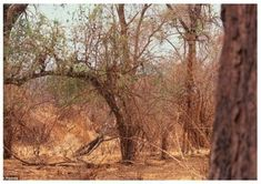 No animal is too big to use camouflage. Can you spot the giraffe? Camouflage Animals by Art Wolfe Art Wolfe, Reto Mental, Animal Pictures, Funny Pictures, Animals Photos, Hidden Pictures, Hidden Images, Random Pictures, When U See It