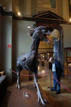 Terror Bird display at The Museum of Natural History (German: Naturhistorisches Museum). Also known as the NHMW, a large natural history museum located in Vienna, Austria.