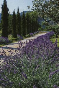 .lavender, boxwood, cypress, gravel, and stone ... Oh my!