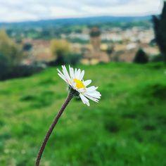 Also the small things are beautiful  #flower #fiore #margherita #pretty #castelfiorentino #vista #panorama #bello #beautiful #pretty #followme #follow4follow #instalove #life #love #natura #nature #momenti #toscana #tuscany #tuscanybuzz #tagsforlikes #igers #insta #igersitaly #igerstoscana by tiziana__t