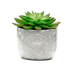 Cheap Succulent Planter / Cactus Planter. 5 Inch Gray Cement Flower Pot Container Stamped with Flowers and Garden  by TERRARIUMS FOR SALE https://ledgrowlightsreviews.info/cheap-succulent-planter-cactus-planter-5-inch-gray-cement-flower-pot-container-stamped-with-flowers-and-garden-by-terrariums-for-sale/