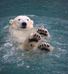 Polar Bear Swimming | Polar Bear Swim