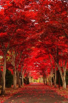 Wandering through the last days of fall in Hokkaido . Photo by: . Wonderful Places, Beautiful Places, Beautiful Pictures, Landscape Photography, Nature Photography, Travel Photography, Autumn Scenes, Destination Voyage, Colorful Trees