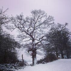 Snow Tree - Grims Dyke London