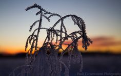 Lapland-themed nature art from Rovaniemi, Finland