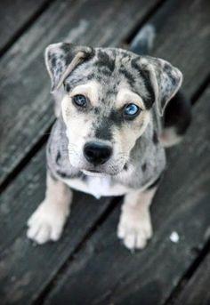 #puppyeyes
