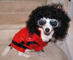 Thriller dog costume cute animals halloween diy costumes costume ideas dog costumes pet costume ideas #Iris! #Iyosu