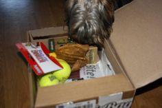 Tassen - DoggieBag.no #DoggieBag #Hund