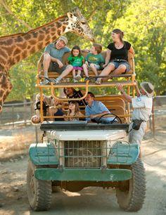 Safari West - Napa Valley  Tour Prices Peak Season June-AugustSpring/Fall March-May, September-DecemberWinter January-February Adults/Teens$80 Children 3-12$32 Toddlers 1-2$15 Adults/Teens$78 Children 3-12$32 Toddlers 1-2$15 Adults/Teens$70