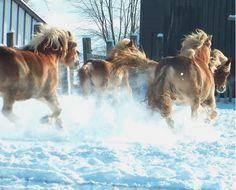winter run! :)