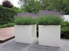 Grote witte plantenbakken van polyester, aangeplant met lavendel.
