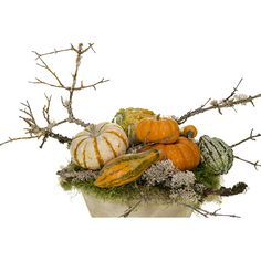 Tumbling Pumpkins ❤ liked on Polyvore featuring home, home decor, holiday decorations, autumn, orange home accessories, autumn centerpieces, fall home decor, pumpkin centerpieces and pumpkin home decor