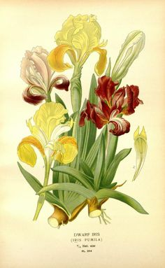 1897 - Favourite flowers of garden and greenhouse / - Biodiversity Heritage Library