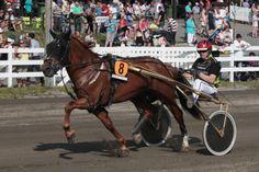 Finnhorse stallion Camri is heading to Elitkampen 2014!  http://finnhorseblog.com/2014/05/17/camri-and-rapin-aatos-to-elitkampen-2014/